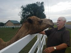 Dad and the sweet camel