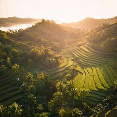 Stunning rice terraces view in Danao, Bohol Island 🇵🇭😍♥️ Bohol, Palawan, Philippines, Stuff To Do, Things To Do, Siargao Island, Whale Watching Tours, What To Do Today, Rice Terraces