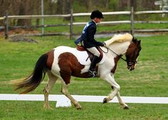 Tips to Develop Your Horse's Topline | Classic Equine