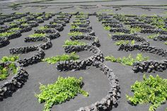 Lanzarote. Canario, Country Living, Farming, Over The Years, Spain, Gardening, Island, Wine, Holiday