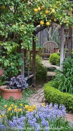 Amazing Gardens, Beautiful Gardens, The Secret Garden, Secret Gardens, Dream Garden, Diy Garden, Garden Beds, Lush Garden, Bamboo Garden