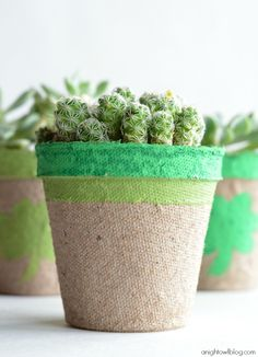 Lucky Succulents - a cute craft or gift for St. Patrick's Day!