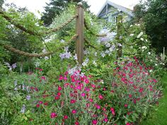 The first rope gate that I've seen and liked. Works wonderfully with the gardenscape/flowers.