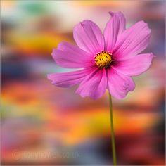 La naturaleza en su máxima belleza... No necesita ser fina para ser perfecta.