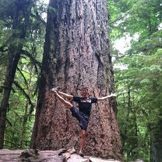 We stopped in an old growth forest today on our way to the coast for a week of kayaking and camping. See ya soon social media! #offgrid photo: Utthita Hasta Padangusthasana in front of an 800-year-old tree, in #CathedralGroveForest on #VancouverIsland. #beautifulBC #getoutdoors #travel #yoga #blaimyoga photo by @myfiveacres #exploreBC