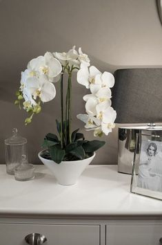 Incroyable Comment prendre soin d& orchidée à la maison - Tout sur l& de. Amazing How-To-Care-An Orchid-Flower-White-Ideas How To Care For An Orchid At Home - All About The Adaptation Of This Plant & What Phalaenopsis Orchid Care, Orchid Plants, Orchid Vase, Orchid Arrangements, Air Plant Terrarium, White Orchids, Flower Boxes, Small Gardens, Garden Inspiration