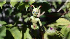 Mariposa varón