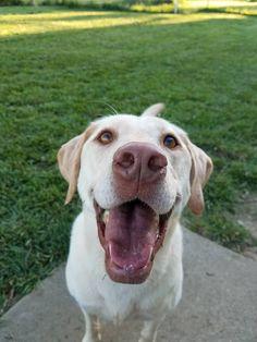 Cubby   http://ift.tt/2rWSBFm via /r/dogpictures http://ift.tt/2rLYOWa  #lovabledogsaroundtheworld