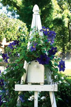"""Special delivery—Landscape designer and contractor Gary Kernick enhanced the cottage feel of an East Sacramento garden he renovated by fitting an ornamental obelisk around the mailbox and planting a vibrant, purpley blue clematis at the base. """"The garden needed a fun focal point, and, of course, the clients needed a mailbox,"""" he says. Yes, mail is delivered to the box."""