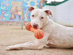 Um juiz declarou que os pet shops de Phoenix, em Arizona, não poderão mais vender animais criados por marcas que visam apenas ao lucro vindo de cães e gatos de raça. A nova legislação obriga-os a oferecer apenas animais resgatados para venda. Entenda melhor em DesignTendencia.com