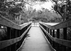 Swamp walk in Armand Bayou.