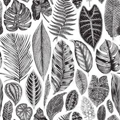 Illustration of Vector seamless floral border. Herbs and wild flowers. Black and white vector art, clipart and stock vectors. Black And White Leaves, White Leaf, Botanical Drawings, Botanical Art, Botanical Illustration Black And White, Deco Surf, Flower Illustration Pattern, Gravure Illustration, Leaf Drawing