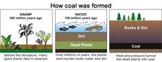 Three images showing how coal was formed. The first image is of a swamp, 300 million years ago. Before the dinosaurs, many giant plants died...
