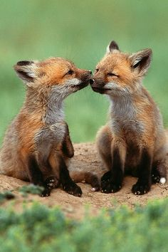~~Friends ~ fox kits by Lise De Serres~~