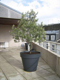 palmier trachycarpus fortunei 2 50 m avec pot toscane eda diam tre 100 cm rose fushia esprit. Black Bedroom Furniture Sets. Home Design Ideas