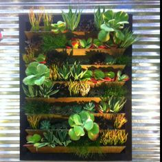 Vertical plant wall. Wow.
