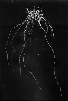 image by Andrew McLeod Black Metal Cy Twombly via History of Our World Metal Band Logos, Metal Font, Metal Bands, Cy Twombly, Death Metal, Typographie Inspiration, Extreme Metal, Spiritus, Arte Horror
