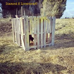 Wooden Creep Feeder – Diamond H Livestock Cattle Farming, Livestock, Sheep Feeders, Feeder Cattle, Goat Pen, Farm Projects, Diy Projects, Sheep Farm, Agriculture