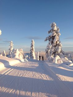 Levi, Finland. Photo credit @Virpula1