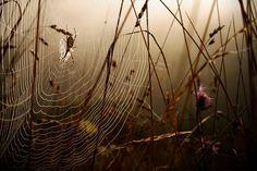 Astonishing Photographs of Spider Webs