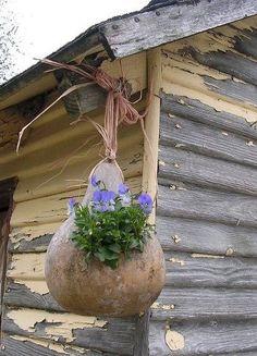 Hanging gourd planter
