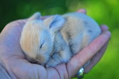 baby bunny in hand. swoon!