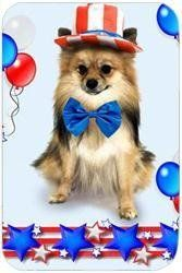 Pomeranian Tempered Large Cutting Board 4th of July by Doggie of the Day, http://www.amazon.com/dp/B004RYN1II/ref=cm_sw_r_pi_dp_em80rb0HECT6A