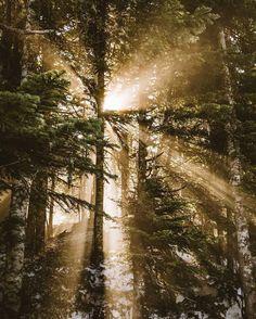 Beateous beams break through the dark forest ...