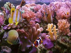 Beautiful coral reefs.