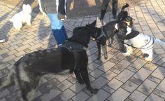 19/02/2016 - Torino con Axel, Peja, Zorba e Billo