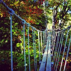 Photo of Navitat Canopy Adventures - Asheville - Barnardsville, NC, United States