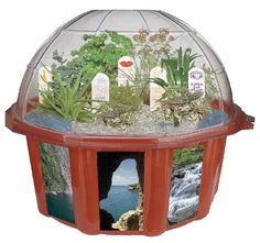 Sensory Dome Terrarium and thousands more of the very best toys at Fat Brain Toys. Tantalize your five senses with the Sensory Dome. It contains seeds of plants for each of the five senses! Learn about these fascinating plant. Gothic Garden, Sensory Garden, Grow Kit, Fun Arts And Crafts, Terrarium Plants, Growing Seeds, Growing Plants, Exotic Plants, Pink Polka Dots