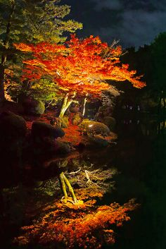 Autumn leaves at night, Kenrokuen park, Kanazawa, Ishikawa, Japan