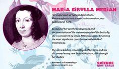 Naturalist and scientific illustrator Maria Sibylla Merian died 299 years ago today. Sibylla Merian, David Attenborough, Illustrator, Science, Math, Memes, Math Resources, Meme, Illustrators