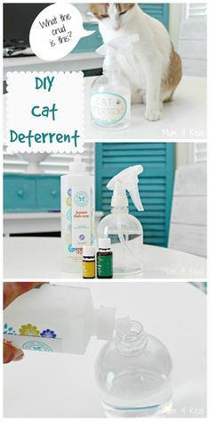 DIY Cat Deterrent - Stop Furniture Scratching and Urinating on Carpet