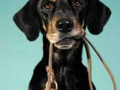 Dog Training – Pooch Portal