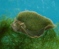 Animal e vegetal ao mesmo tempo? Lesma marinha faz fotossíntese após roubar genes de algas | Jornal Ciência