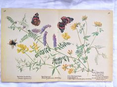 Vintage Botanical Book Page Butterflies Bumble от TheFruitPixie
