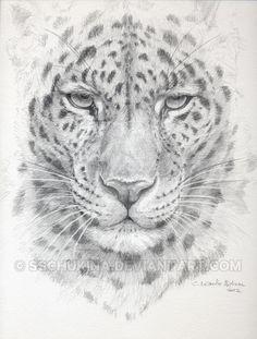 "Drawing-sketch ""Cute Ostrich"" by Svetlana Ledneva-Schukina. ref.SK053 Struthio camelus Struthionida graphite pencils on paper."