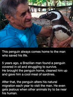 Unlikely friendship between a man and a penguin - 9GAG