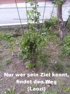 Nur wer sein Ziel kennt, findet den Weg (Laozi) Plants, Mathematical Analysis, Happy Life, Goal, Quotes, Plant, Planets