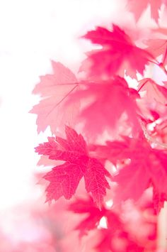 I love pink and autumn! So pretty in pink! Color Rosa, Pink Color, Pink Purple, Magenta, Pink Art, Pastel Pink, Pink White, Pretty In Pink, Couleur Fuchsia