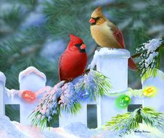 Christmas Cardinals - brown, Cardinals, lights, red, trees, white fence
