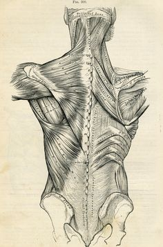 Human Back - Human Body Anatomy Illustration - 1887 Antique Medical Plate via Etsy