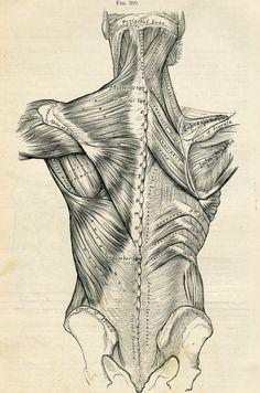 Human Back - Human Body Anatomy Illustration  - 1887 Antique Medical Plate via Etsy