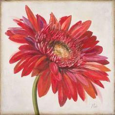 Red Gerber Daisy Canvas Art - Patricia Pinto (24 x 24)