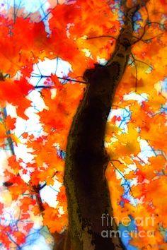 Oh man...I love fall.
