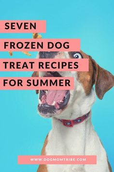 Ready to give your dog a tasty treat for summer? These 7 homemade dog treat recipes are easy & fun to make! #dogtreats #homemadedogtreats #dogtreatrecipes #dogmoms #doglovers