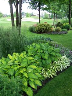 Shade: contrasting hostas -- leaf size + colors