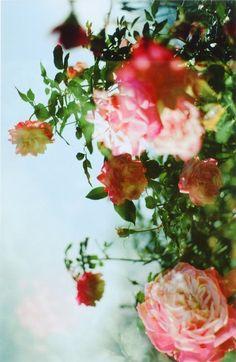 flower no. 23